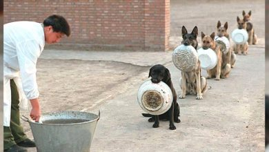 Photo of These Police Dogs Who Line Up To Eat Are Much More Orderly And Patient Than Us Humans