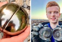 Photo of Student Finds 'golden Snitch' Hiding 185-million-year-old Sea Creature.