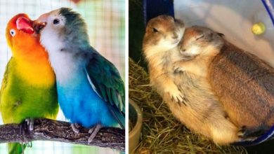 Photo of 14 Photos Show How True Love Also Exists In The Animal World