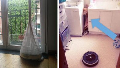 Photo of 16 People Who Left The Robotic Vacuum Cleaner Alone And Found It In The Most Absurd Situations