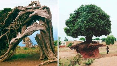 Photo of 19 Trees That Surprise Everyone With Their Will To Live.