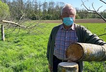 """Photo of They Cut Down 12 Walnut Trees From An Arborist During The Night: """"It's A Disaster, They Were My Pride"""""""