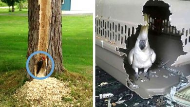 Photo of 19 Hilarious Images That Prove Birds Know How To Be Very Naughty (And Even Destructive).