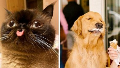 Photo of This Facebook Page Shares Photos Of Animals That Are Worth A Look.