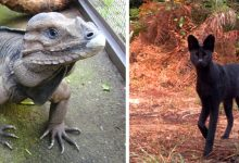 Photo of 15 Extremely Rare Species You Never Knew Existed In The Wild.