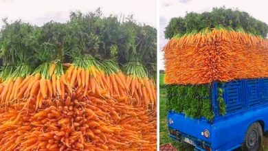 Photo of 38 Strangely Satisfying Photos For Lovers Of Order.