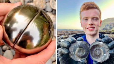 """Photo of Student Finds """"Snitch"""" Hiding 185-million-year-old Sea Creature."""