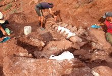 Photo of The Remains Of A Titanosaur Found In Patagonia: It Could Be The Largest Land Animal To Ever Exist.