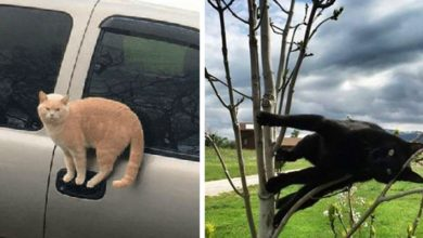 Photo of Cats Defying The Laws Of Physics: 13 Funny Photos Of Cats Taken In The Most Absurd Poses.