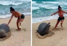 Photo of Two Newlyweds On Honeymoon In Hawaii Touch Endangered Seal: They Are Fined.