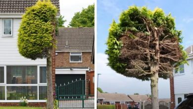 Photo of He Cuts His Neighbour's Tree In Two Because It Invades His Space: He Had Been There For More Than 25 Years.