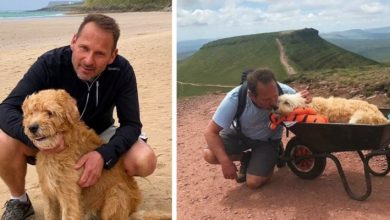 Photo of His Dog Has Only A Few Days To Live, He Carries Him In A Wheelbarrow For One Last Adventure Together