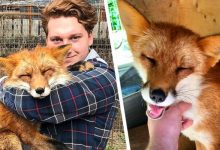 Photo of Boy Saves Fox From Fur Farm: They Are Now Inseparable.