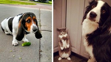 Photo of These Animals Were Caught Red-handed In Absurd And Hilarious Acts.