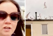 Photo of Neighbors Prevent Her From Sleeping All Night At The Campsite: She Takes Revenge With The Help Of Gulls