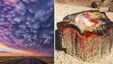 Photo of 15 Times Nature Unwittingly Gave Us Incredible Works Of Art.