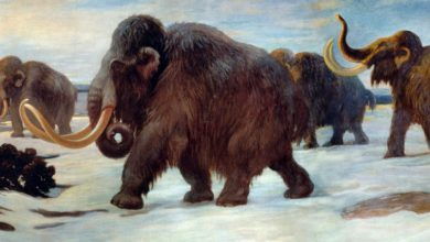 Photo of A Team Of Scientists Want To Revive The Mammoth, Extinct About 10,000 Years Ago.